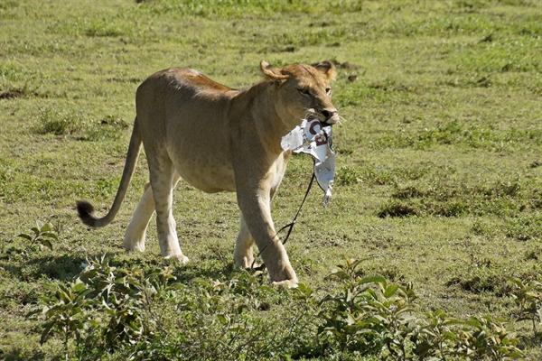 BRS Secretariat marks World Wildlife Day, 3 March